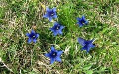 CIMG7194-Blumen