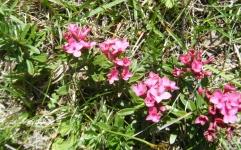 DSCF1797-Blumen