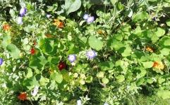 P1120062-Blumen